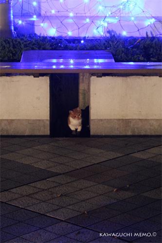 20120208_cat.jpg