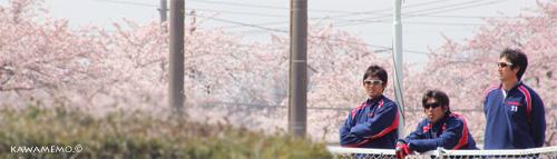 筑川と桜の組合せは和菓子にも劣らない